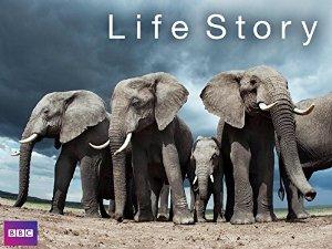 Life Story: Season 1