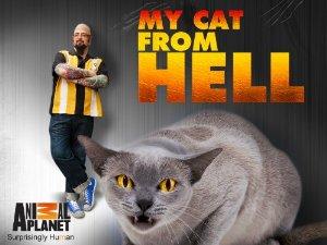 My Cat From Hell: Season 8