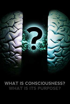 What Is Consciousness? What Is Its Purpose?