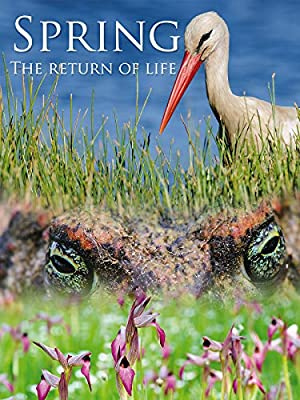 Spring: The Return Of Life