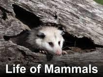 The Life Of Mammals: Season 1