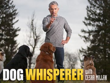 Dog Whisperer With Cesar Millan: Season 6