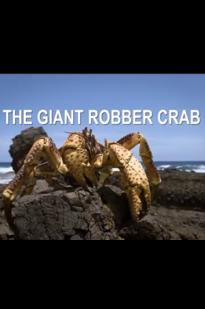 The Giant Robber Crab
