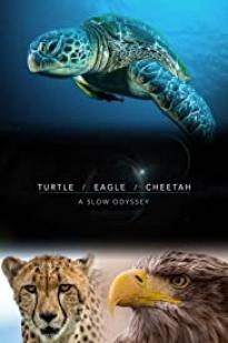 Turtle, Eagle, Cheetah: A Slow Odyssey